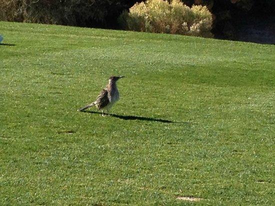 Desert Willow Golf Resort : #8 From the Tee - Local Inhabitant - PLAYING THORUGH BUDDY!!