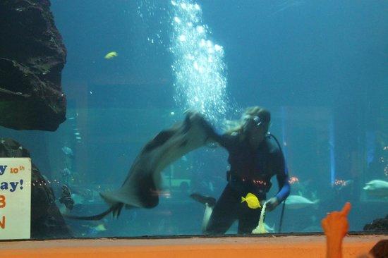 Alohilani Resort Waikiki Beach: oceanarium