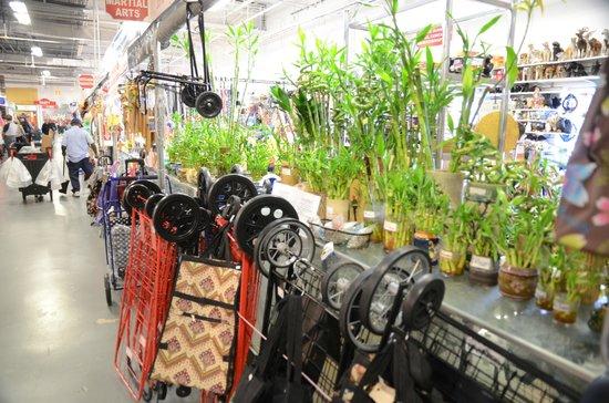 Festival Marketplace : Need plants?