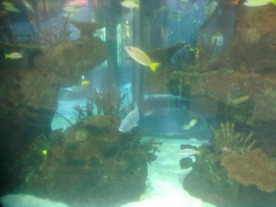 Morocco Mall Aquarium : Mall aquarium - Picture of Morocco Mall, Casablanca - TripAdvisor