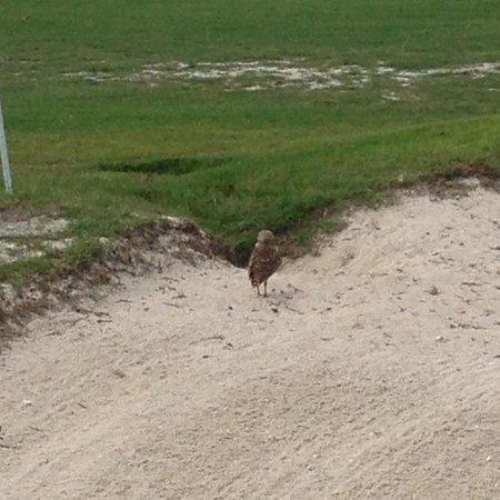 Links at Divi Aruba : 9th hole