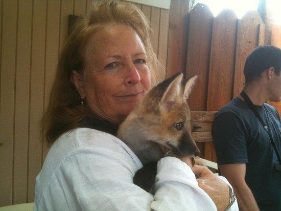 West Coast Game Park Safari: BABY FOX