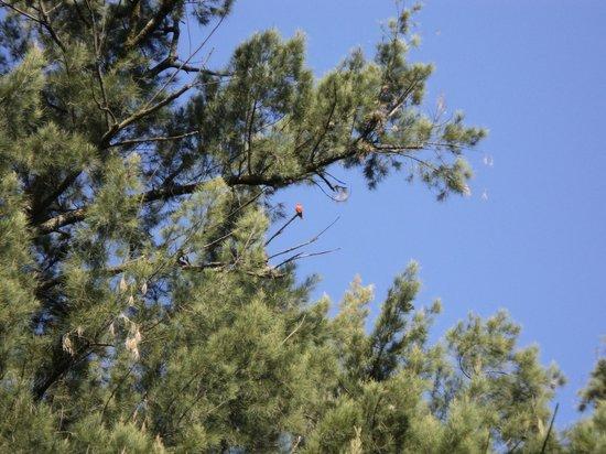 Teotihuacan RV and Trailer Park : Contacto Directo con la naturaleza, Vista de pajaron en migración.