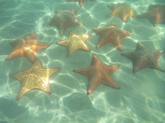 Hotel y Restaurante Campamento: starfish colony during boat tour