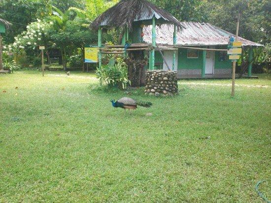 Taironaka Turismo Ecologico y Arqueologia : Es un pozo indigena en frente al comedor del hotel.