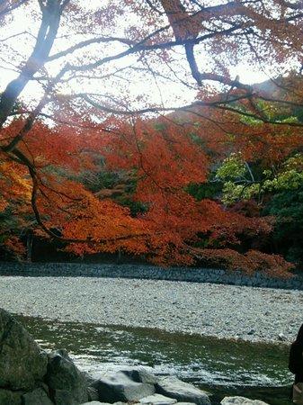 五十鈴川の紅葉です。