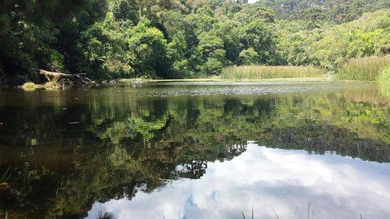 Parque Estadual da Cantareira - Nucleo Pedra Grande: Lago das carpas
