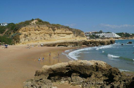 Auramar Beach Resort : Coastline behind hotel