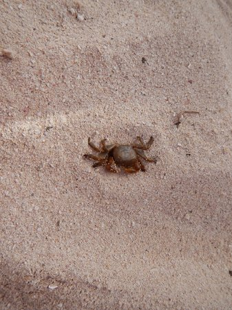 Mahahual Beach: You have crabs