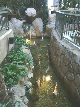 Embassy Suites by Hilton Hotel Monterey Bay - Seaside: Koi pond from the little bridge
