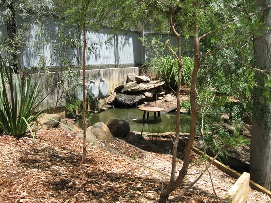 Tamworth, Australia: Inside the Free Flight Aviary