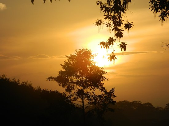Eco Jungle Hideout: Morning Sunset