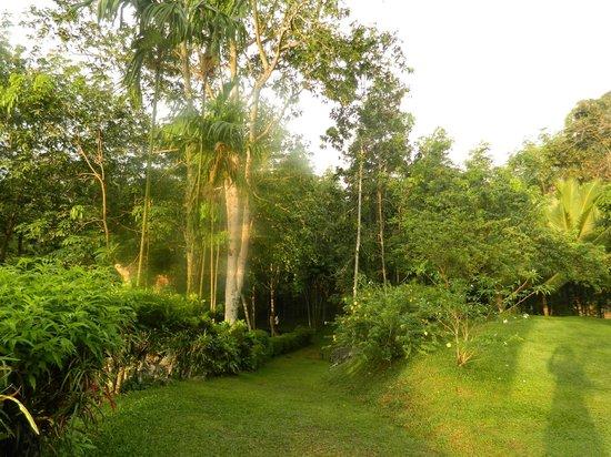 Eco Jungle Hideout: Entrance Lawn