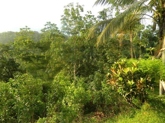 Eco Jungle Hideout: Forest