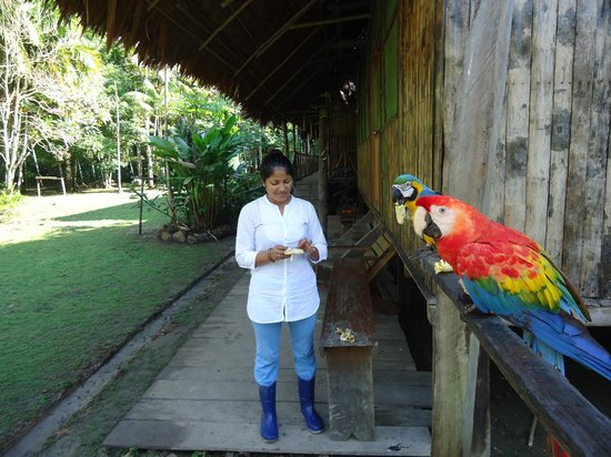 Otorongo Expeditions Jungle Lodge: Wife with resident guacamayos