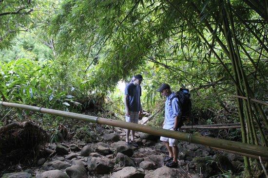 Awapuhi Adventures : Bamboo forest trek