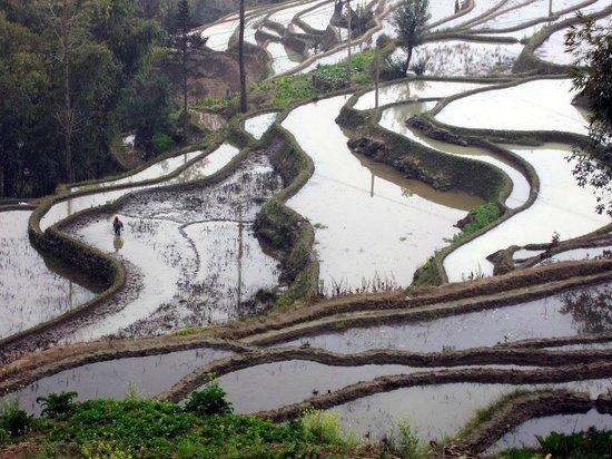 Yuanyang County, China: terraced rice fields
