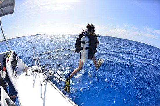 Caribbean Paradise Inn: Diving