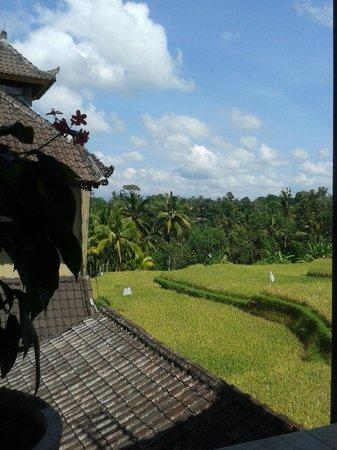 Dukuh Village Homestay: vue de la sky view
