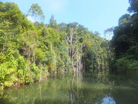 Khlong Chak Waterfall: on the trail thru the djungle