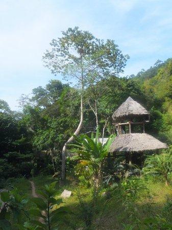 Khlong Chak Waterfall: djungle house