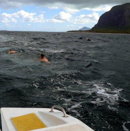 Tamarin Bay : Snorkling avec les dauphins