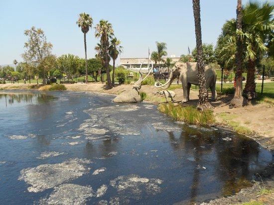 Los Angeles County Museum of Art: Teergrube