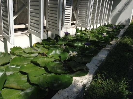 Laksasubha Hua-Hin : The water garden by reception.