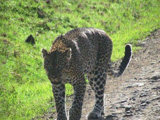 The Ark: Lucky leopard