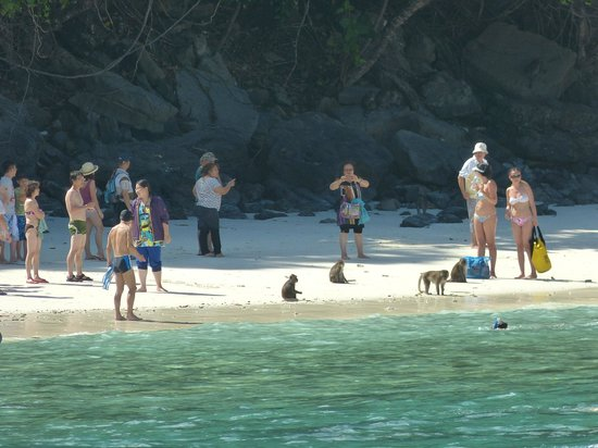 Sofitel Krabi Phokeethra Golf & Spa Resort: Monkey Beach dans le Phi Phi trip.