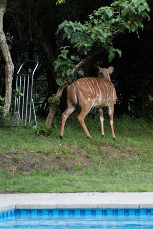 Jacana Lodge: Another visitor at the lodge