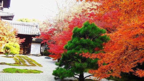 Tenjuan Garden : 庭園3