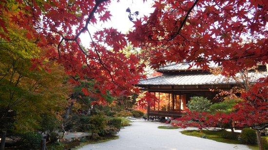 Tenjuan Garden : 裏側庭園