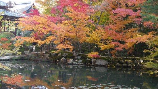 Tenjuan Garden : 池の紅葉