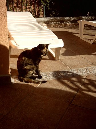 Venesol Apartments: Local Friendly Cat used to come for Breakfast