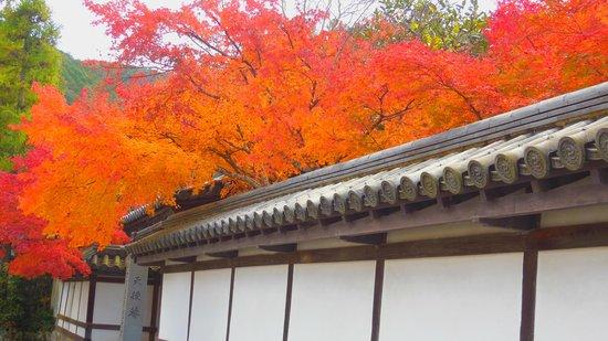 Nanzen-ji Temple: 天授庵外壁