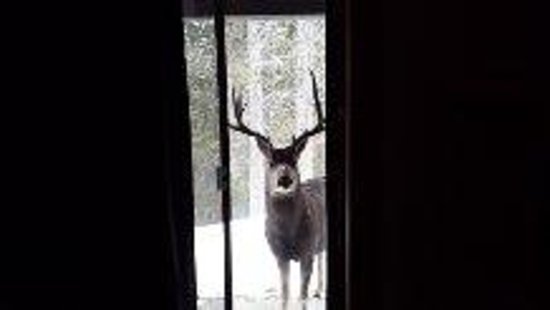 Hidden Ridge Resort: good morning Deer!