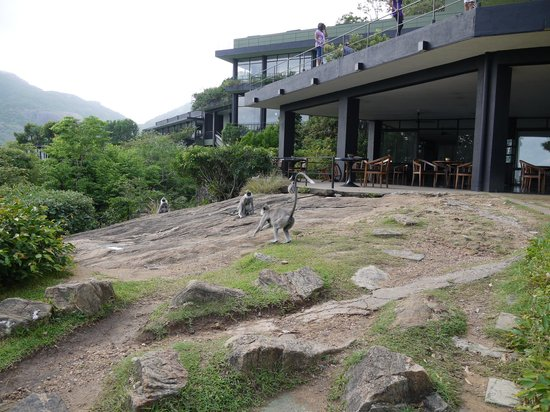 Heritance Kandalama: 野生の猿