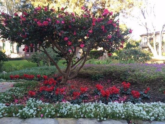 Pacifica Suites Santa Barbara: Jardim interno.