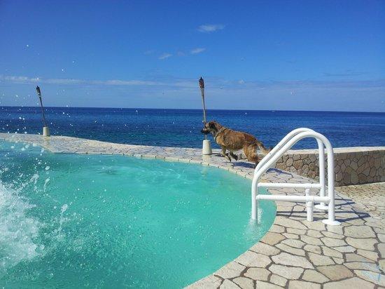 The SPA Retreat Boutique Hotel: Роза - ныряющая собака