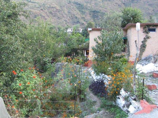 Jamwal Villa Homestay: Flowering at Jamwal Villa