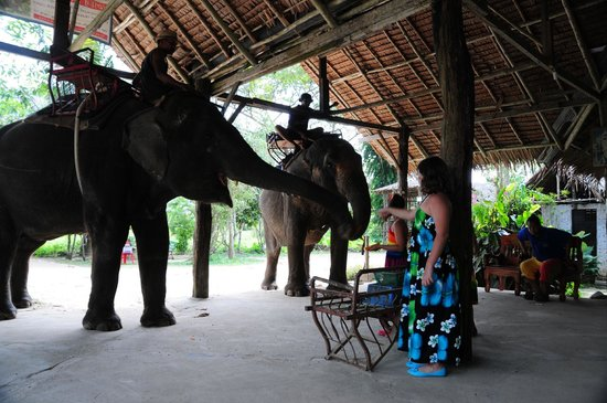 Nosey Parker's Elephant Camp - Private Day Tours : feeding elephants