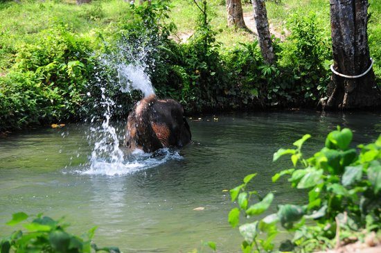 Nosey Parker's Elephant Camp - Private Day Tours : after trek