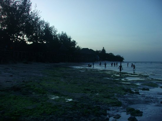 Mnarani Beach Cottages: Locals looking for seafood at low tide