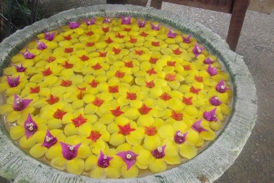 Sinalei Reef Resort & Spa: Garden pot beautifully decorated by the resorts gardners