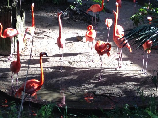 Tampa's Lowry Park Zoo: Talking flamingos