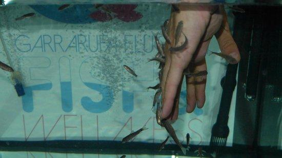 Garrarufa Fluo Spa: fish manicure