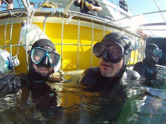 White Shark Projects: dentro la gabbia