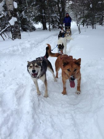 Nature's Kennel Sled Dog Racing and Adventures: Mushing Along!