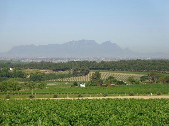Grangehurst Winery : That view!